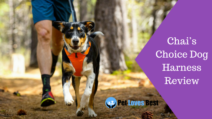 Featured Image Chai's Choice Dog Harness Review