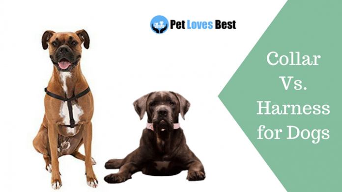 Featured Image Collar Vs. Harness for Dogs
