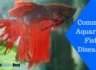 Featured Image Common Aquarium Fish Diseases