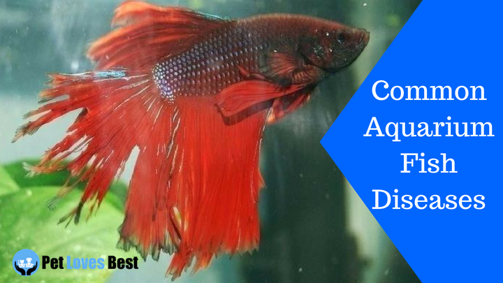 5 Common Aquarium Fish Diseases Symptoms Cure