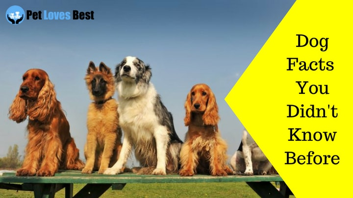 Featured Image Dog Facts You Didn't Know Before