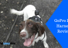 Featured Image GoPro Dog Harness Review