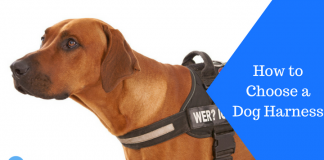 Featured Image How to Choose a Dog Harness