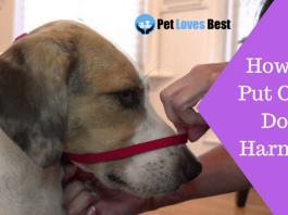 Featured Image How to Put On a Dog Harness