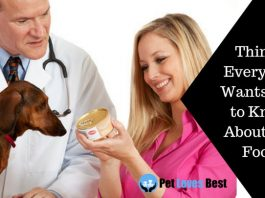 Featured Image Things Every Vet Wants You to Know About Cat Food
