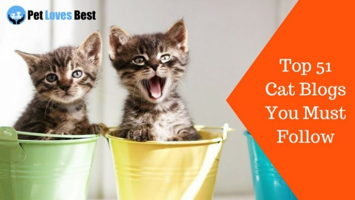 Featured Image Top 51 Cat Blogs You Must Follow
