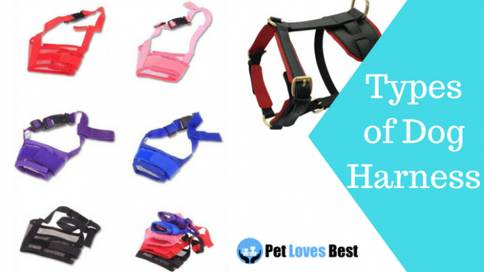 Featured Image Types of Dog Harness