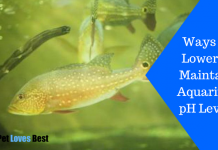 Featured Image Ways to Lower & Maintain Aquarium pH Level