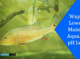Featured Image Ways to Lower & Maintain Aquarium pH Level