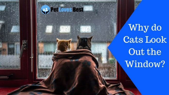 Featured Image Why do Cats Look Out the Window?