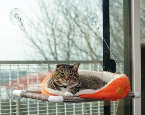 World's BEST Cat Perch