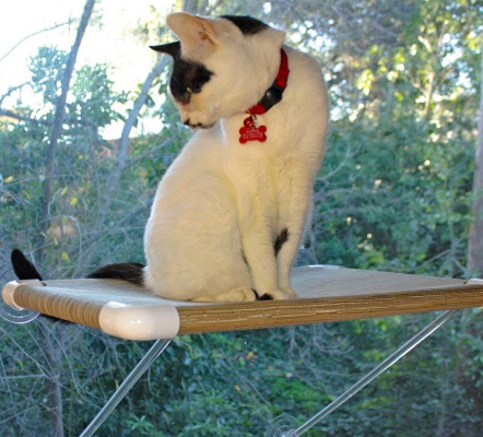 Cat Perch with No Hanging Wires