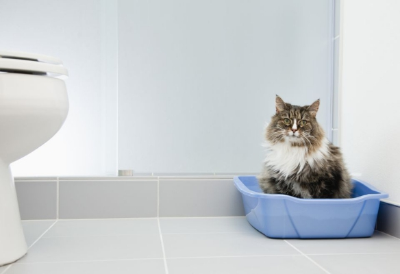 simple issues with the litter box