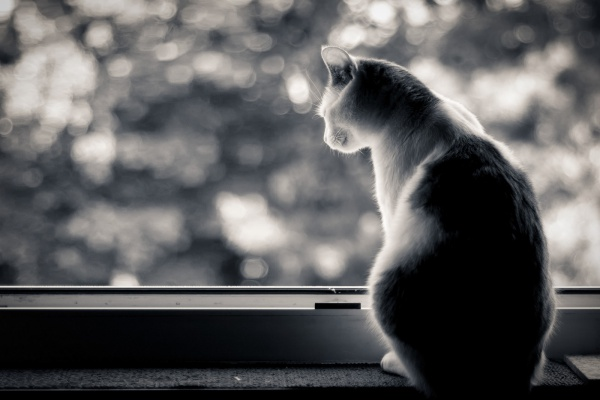 Why do Cats Look Out the Window?