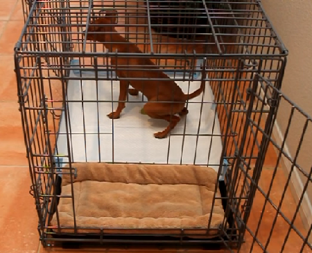 dog crate soiling