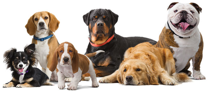 Dog Breed that Suits You the Best
