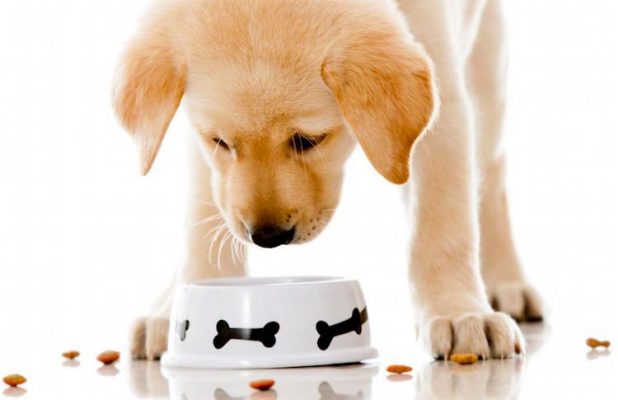 Wet, Dry, Organic and Grain-free dog food