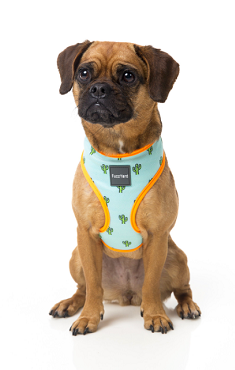 Dog Harness Because a Collar is for the Wicked