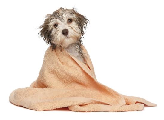 Dog Shampoo - To Keep that Coat Soft, Shiny &Gorgeous