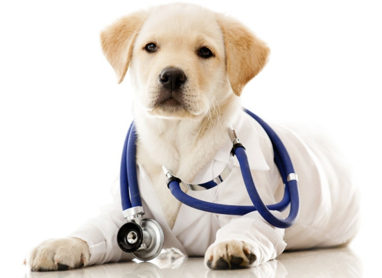 Get the puppy Vaccinated