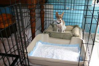 dog crate with potty area