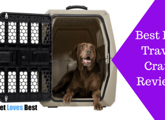 Featured Image Best Dog Travel Crate Reviews
