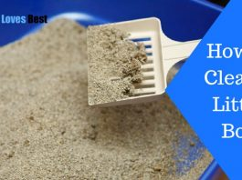 Featured Image How to Clean a Litter Box