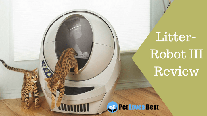 Litter Robot Iii Review For 2019 Read This Before Buying