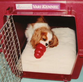 sound proof dog crate