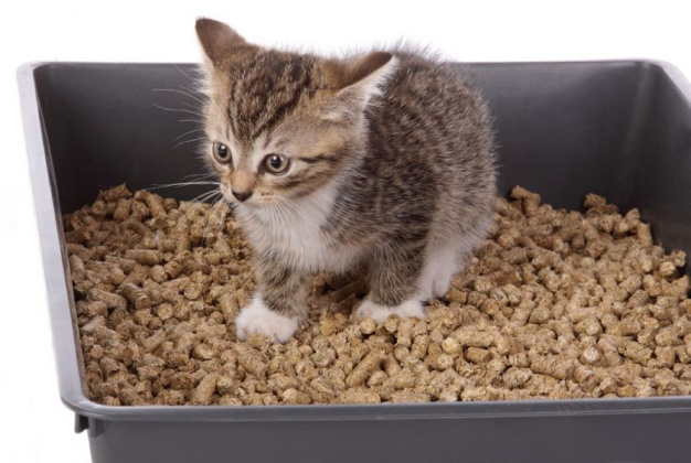Stop kitten from Eliminating Outside the Litter Box