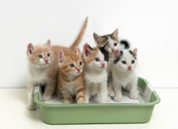 Things to Take Care of If You Have Multiple Kitties
