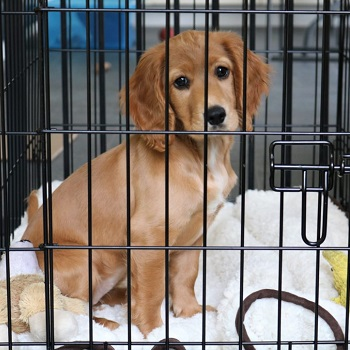 sound proof dog crate cover