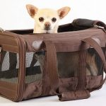 airline approved soft sided dog crate