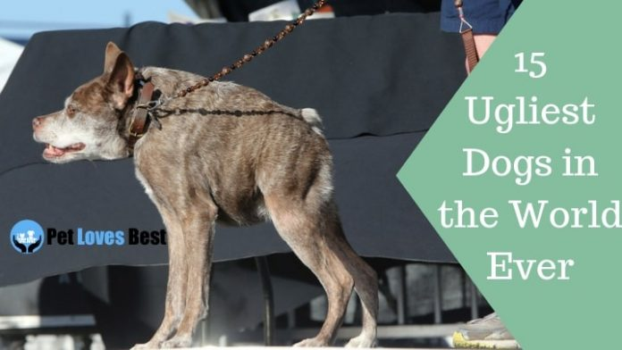 Featured Image 15 Ugliest Dogs in the World Ever