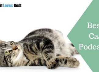 Featured Image Best Cat Podcasts