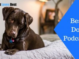 Featured Image Best Dog Podcasts