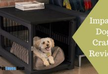 Featured Image Impact Dog Crate Review