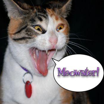 cat podcast on itunes