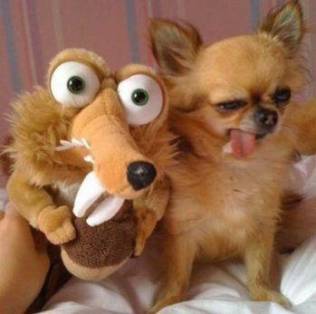 funny ugly dogs and ice age squirrel