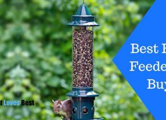 Featured Image Best Bird Feeder to Buy