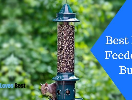 Featured Image Best Bird Feeder to Buy