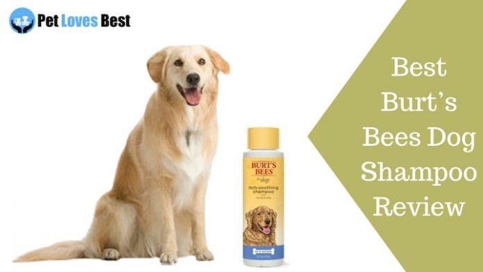 Featured Image Best Dog Shock Collar Reviews