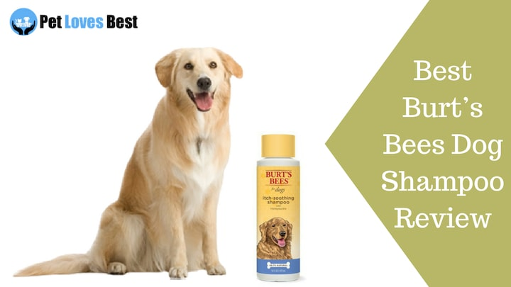e4d01bdaf0f9 Burt s Bees Dog Shampoo Review - Best Dog Shampoo - Pet Loves Best