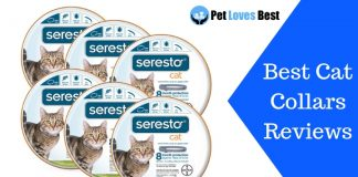 Featured Image Best Cat Collars Reviews