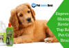 Featured Image Espree Dog Shampoo Review – Top Rated Pet Care Brand