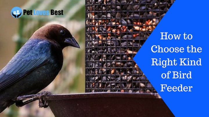 Featured Image How to Choose the Right Kind of Bird Feeder