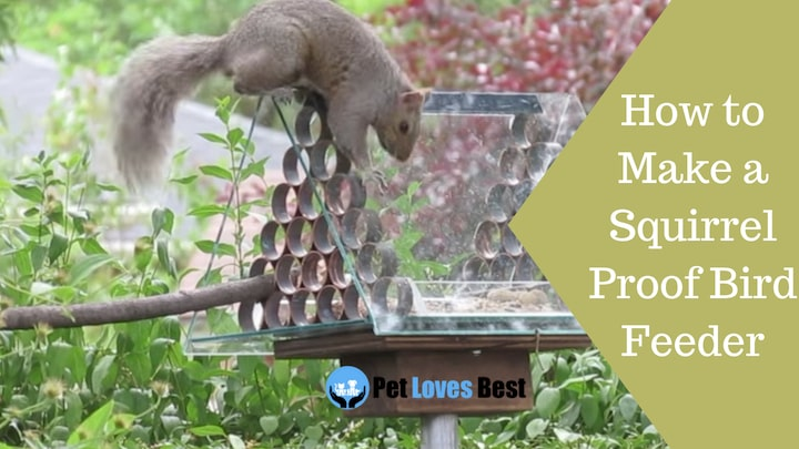Featured Image How to Make a Squirrel Proof Bird Feeder