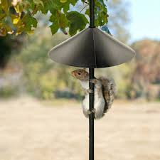 anti squirrel bird feeder