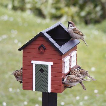 bird feeder stand