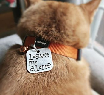 best cat collar tags